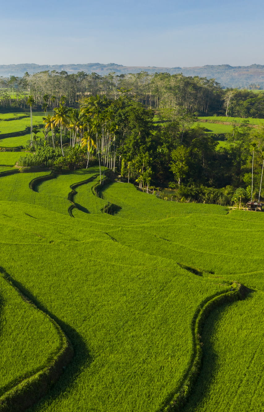 Oasis in rice terraces