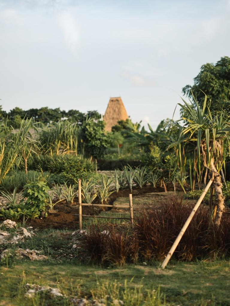 CapKaroso- Farm-garden