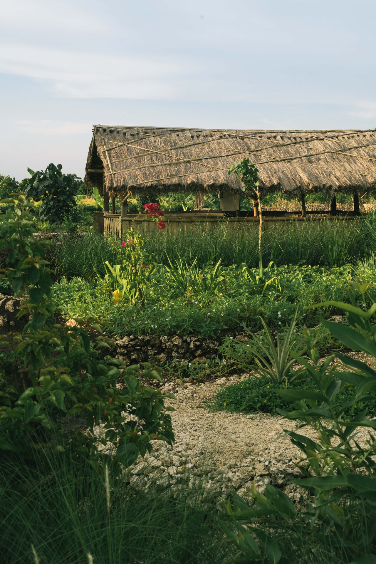 Building of the farm with garden and red flowers in the forefront
