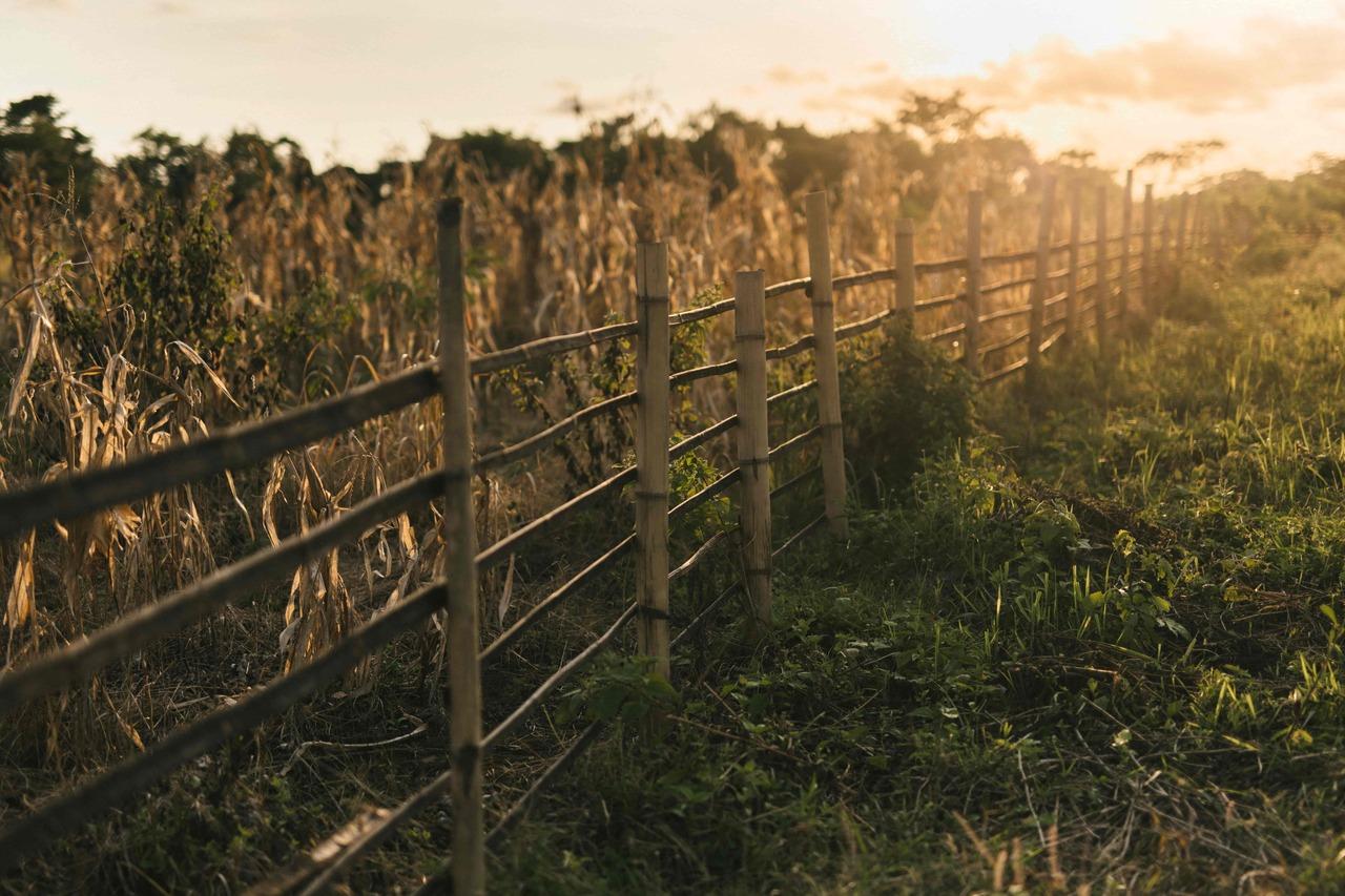 CapKaroso-farm-fence-corn-sunset