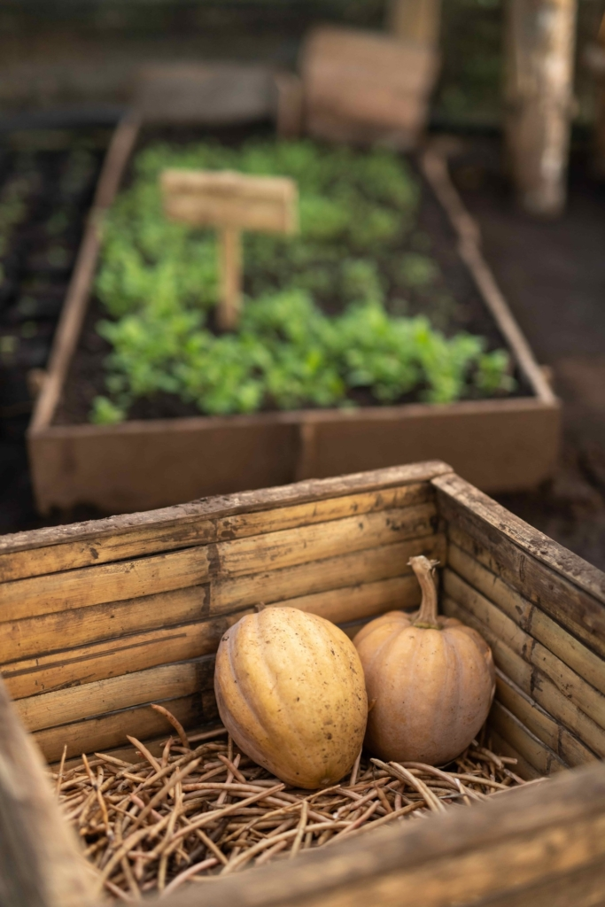CapKaroso-farm-pumpkins-crops