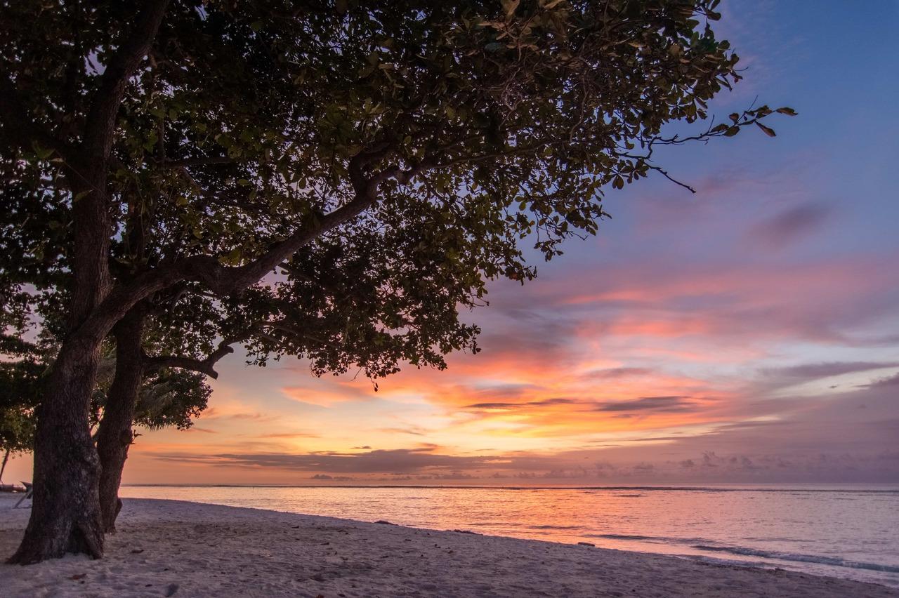 Tree on Karoso beach at sunset purple shades