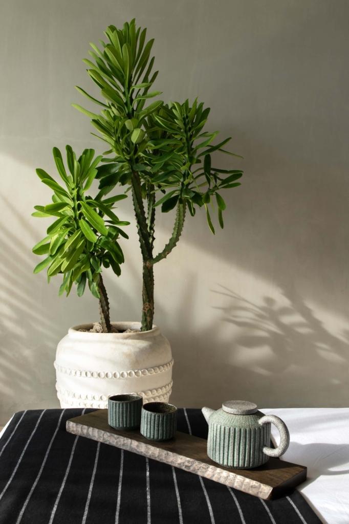 CapKaroso-teaset-bed-plant